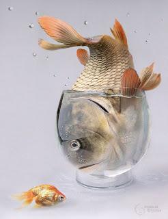 Manipulación digital de imagen de pez