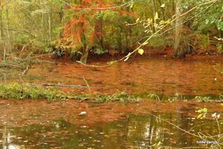 Fall at Zoete waters, Oud-Heverlee, Belgium