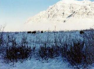 hutan tundra, Ekosistem Darat Dan 6 Bioma