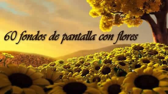 Imagen De Flores Hermosas Para Fondo De Pantalla: Fondos De Flores Hermosas Gratis
