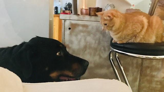 Πόνος στις αρθρώσεις: Τι ανακουφίζει τον σκύλο και τη γάτα