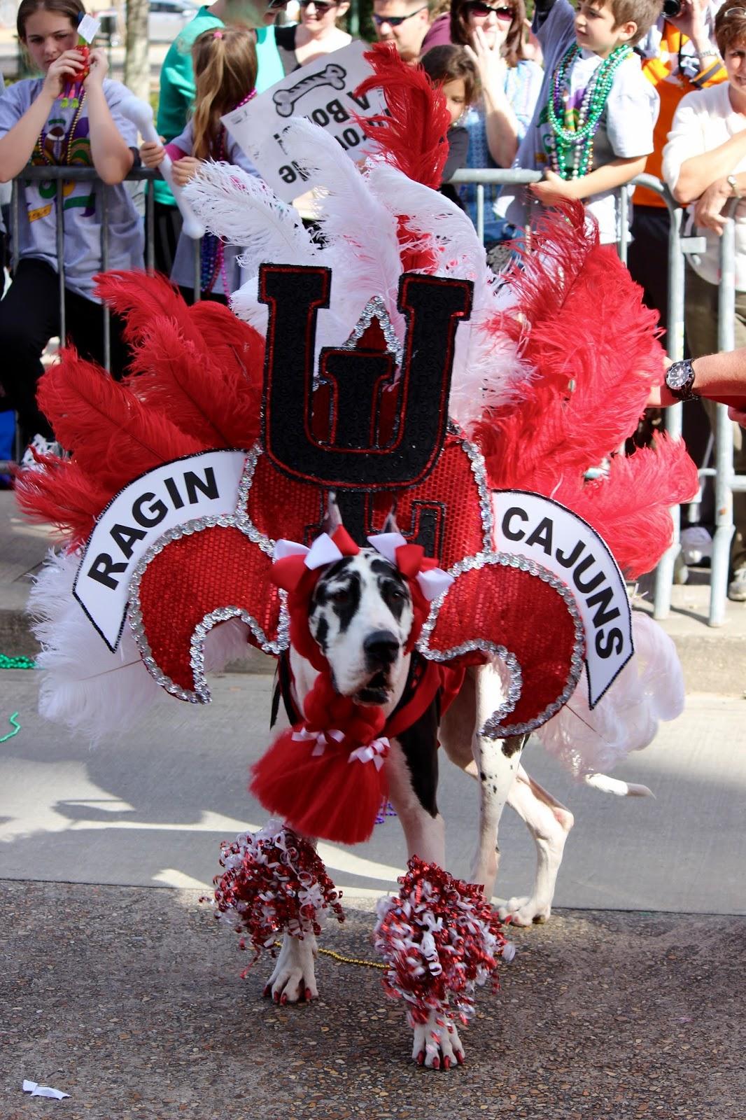 Weird, Wacky and Wild South: Dog costume ideas for Halloween