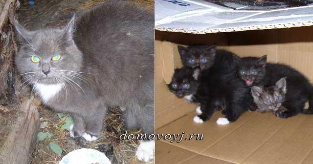 Кошка, которую выбросили с котятами в лесу, отважно защищала своих малышей от собак.