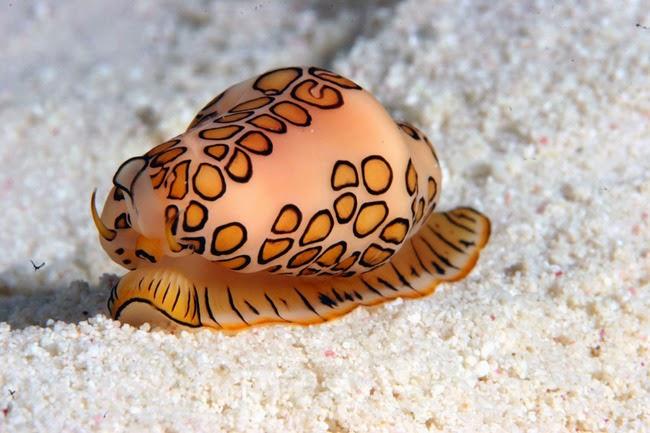Hewan-Hewan Laut yang Unik Di Dunia Hewan-Hewan Laut yang Unik Di Dunia cbe3929d9101947ad4c2bd709376563a 650x