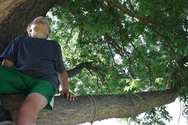 Kisah pohon dan seorang anak.