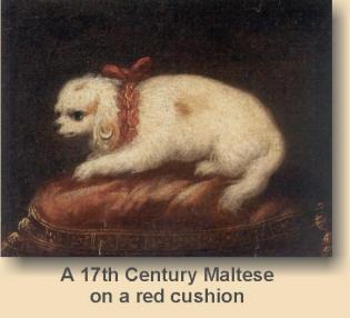 historia raza maltesa de perro
