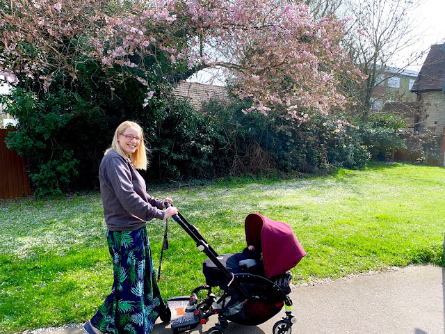 walking with the pushchair with blossom in the background