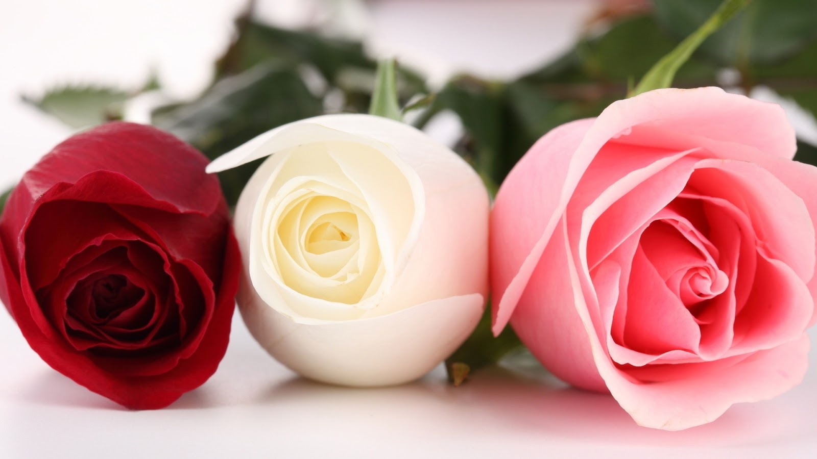 Beautiful Wallpapers For Desktop Of Roses