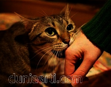 Digigit Oleh Kucing