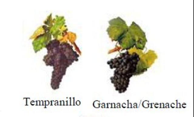 Nho Tempranillo và Garnacha
