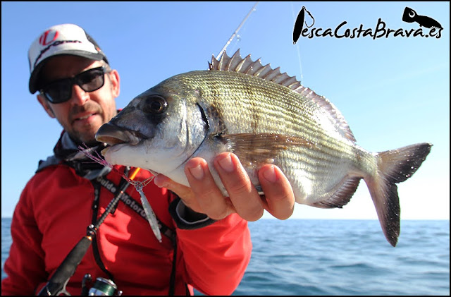 sargo graphiteleader nuovo tiro major craft jigpara tg pesca costa brava jjpescasport - JORNADA DE MICRO JIGGING