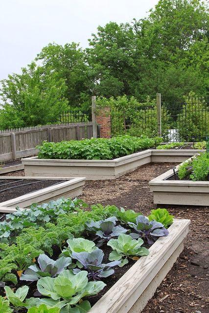 vegetable gardening  dreaming gardens