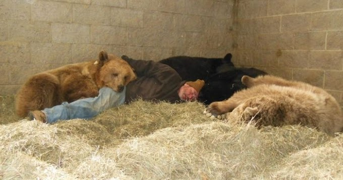 Devoted wildlife keeper takes naps with four orphan bears to help them fall asleep