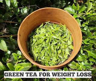 How green tea will help you in weight loss?