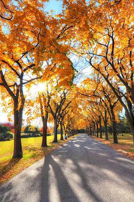 Most Beautiful tree wallpaper