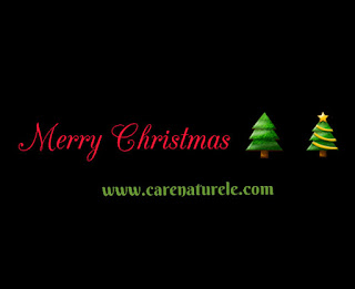 Merry Christmas from carenaturele.com