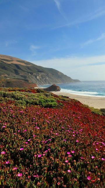 Landscape, sea, coast, mountains, field, iPhone flowers and desktop wallpaper.