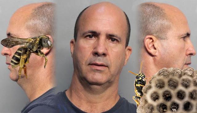 Pria Berulang Kali Mencuri Sarang Lebah