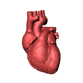 What is an artificial heart, how is it made, and how does it work?