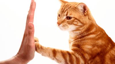 10 consejos que te ayudarán a convertirte en el mejor dueño de gatos de todos los tiempos