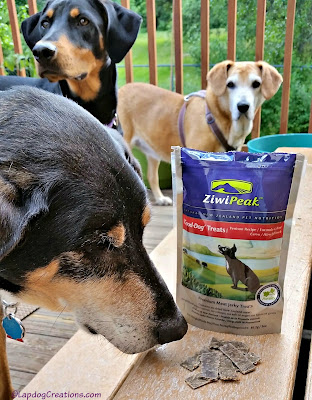 The Lapdogs think #ZiwiPeak Venison Good-Dog treats are delish! Real Meat - Grain Free - Made in New Zealand #ChewyInfluencer #dogtreats #trainingtreats ©LapdogCreations