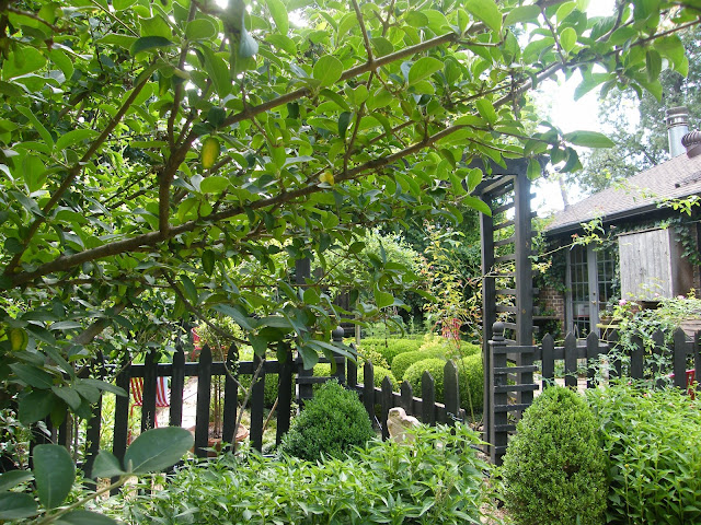 Looking through branches and picket fence into box enclosed potager.