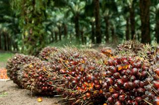 Apakah Semua Hasil Perkebunan Perlu Dizakati