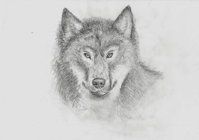 Wolfszeichnung Bleistift