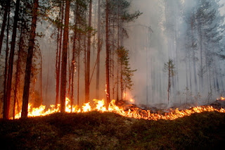 Fire burns in Karbole, Sweden. (Photo Credit:  Mats Andersson/AFP/Getty Images) Click to Enlarge.