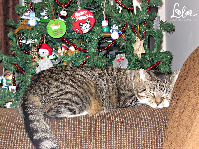 cat's christmas|cat sleeping under tree