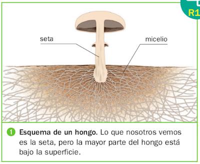 El huerto de mi escuela info sobre el reino fungi - El moho es un hongo ...