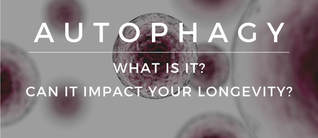Autophagy – what is it and how can it impact your longevity?