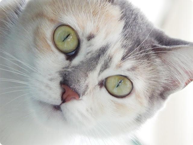 gatinho, gato fofo, gato com instagram, gato blog, adotar um gato, blog de casal