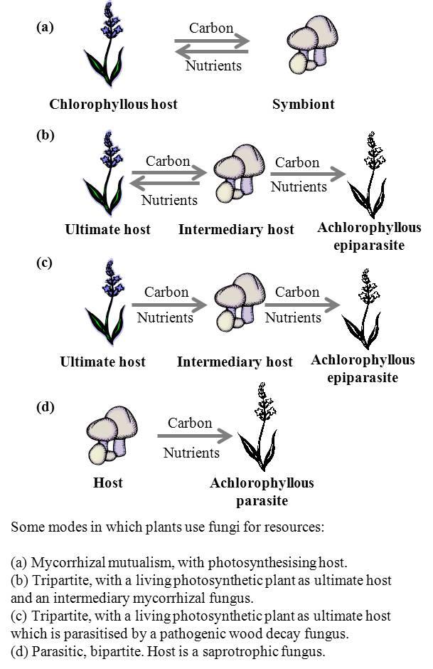 rimedi naturali contro papilloma condiloame pe membrana mucoasă a buzelor mici