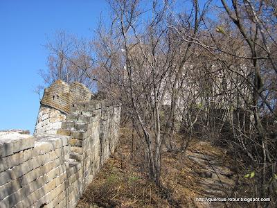 La vegetación en la Gran Muralla China