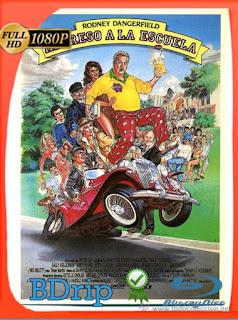Regreso a la escuela (1986) BDRIP1080pLatino [GoogleDrive] SilvestreHD