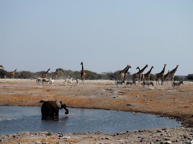 Safari por libre en África