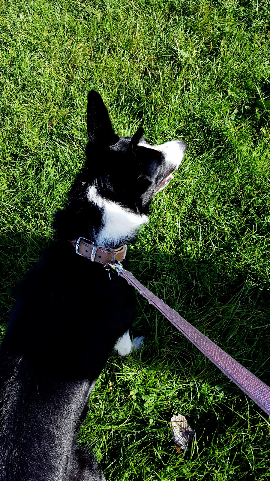 One Of Those Days!! Mollie The Border Collie Day's Out
