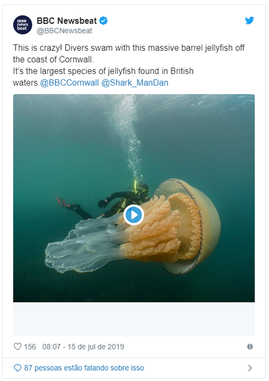 Água-viva gigante surpreende mergulhadores no Reino Unido tweet