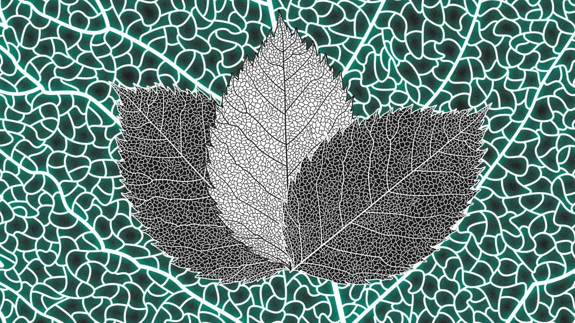 Folha Artificial Transforma CO2 em Metanol