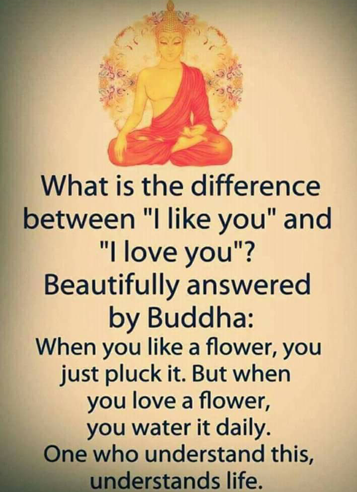 Beautiful Thoughts By Buddha Delectable Buddha Thoughts About Love
