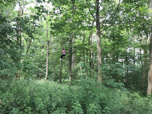 daughter on a zip wire between the trees at Go Ape Matfen Northumberland