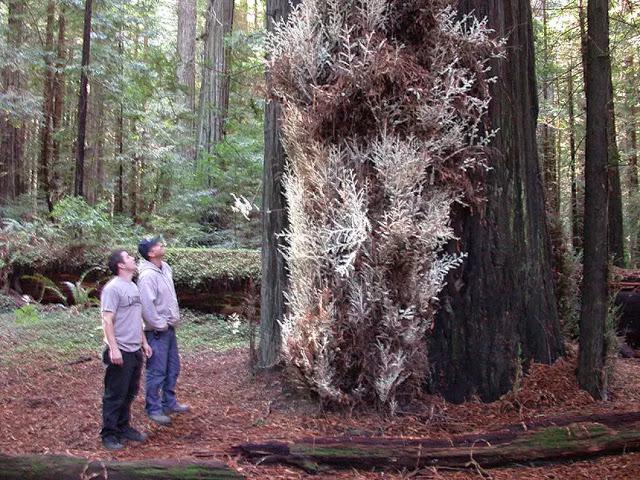 11 Fakta Tentang Pohon Tertinggi di Dunia