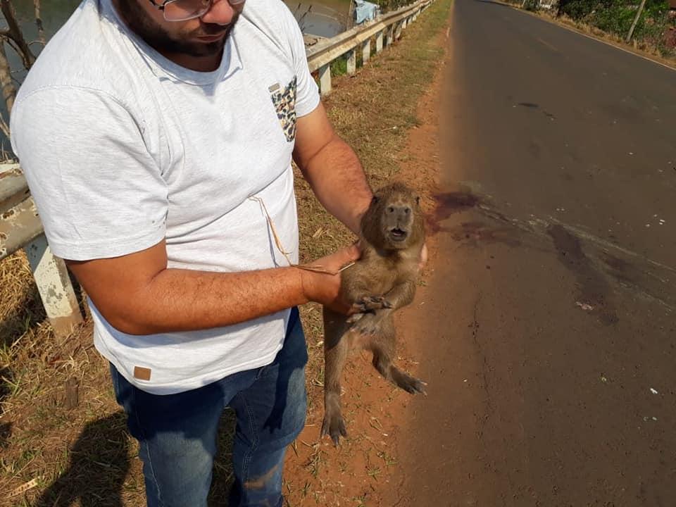 Filhote de capivara é resgatado após sua mãe morrer atropelada em Cajobi