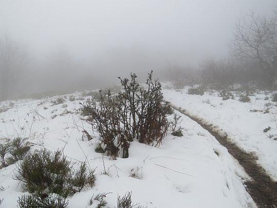 Mgły.