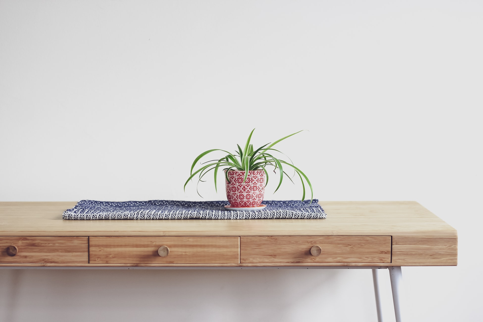 Stock photo of a spider plant