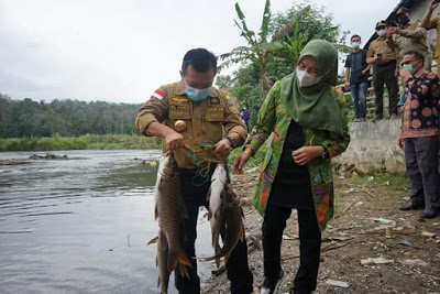 Ikan Semah