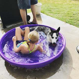san antonio texas huskies grooming