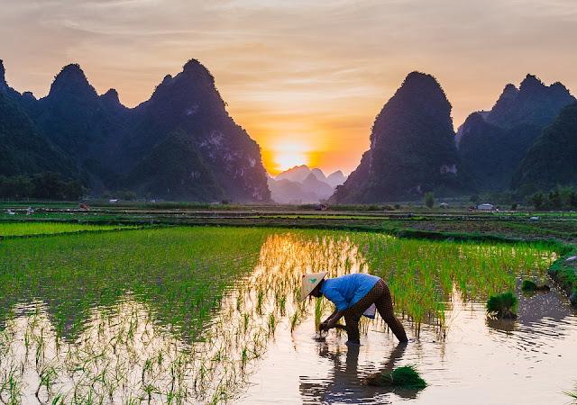 Kendala dalam pertanian organik