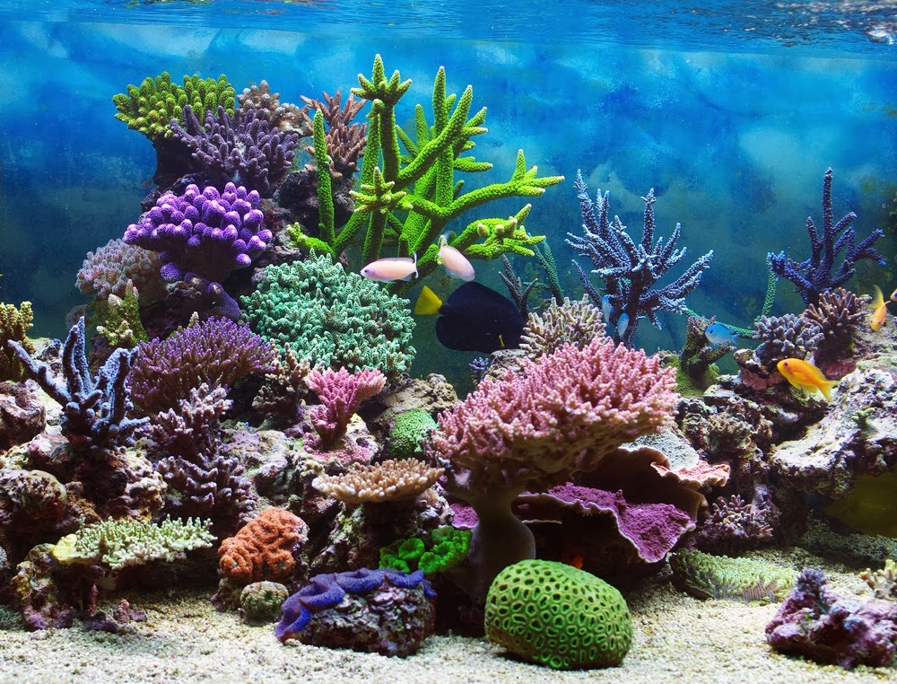beautiful colorful coral reefs - photo #2